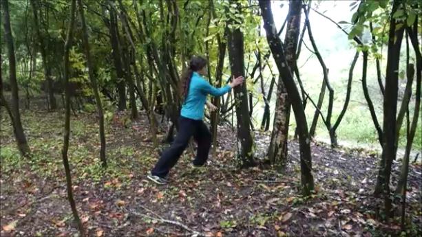 arbre tigre 1