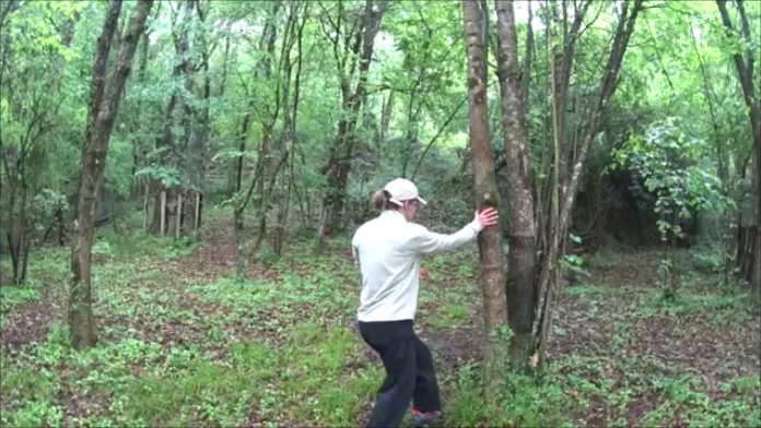arbre tigre 11