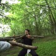 arbre tigre 15